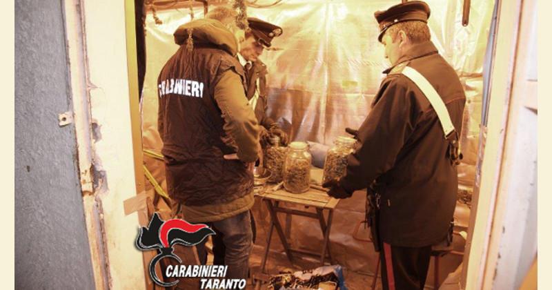 Scoperta un'altra serra di marijuana a Paola, incensurato ai domiciliari